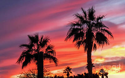 Photograph - Palm Trees Sunset by Robert Bales