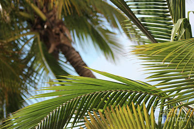 Photograph - Palm Trees by Wilko Van de Kamp