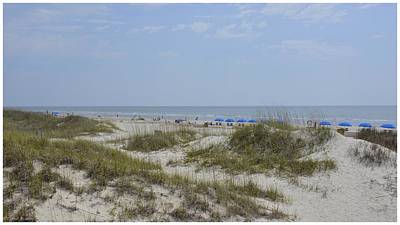 Photograph - Palmetto Dunes Beach by Carol  Bradley