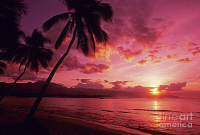 Palms Against Pink Sunset Art Print by Carl Shaneff - Printscapes