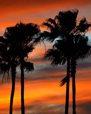 Photograph - Palms At Dusk by David Lee Thompson