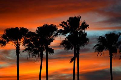 Photograph - Palmset by David Lee Thompson