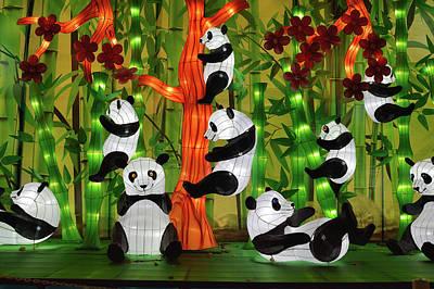 Photograph - Panda Paradise by Vic Harris