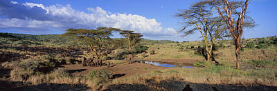 Panoramic View Of African Elephants Art Print