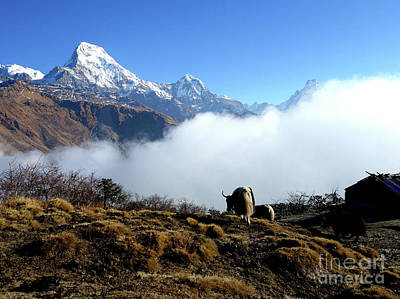 Panoramic View Of Everest Mountain Art Print by Whimsy Art