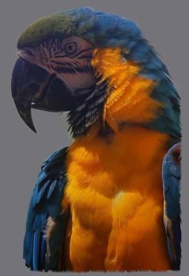 Photograph - Parrot by Pamela Walton