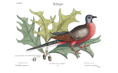 Namaste With Pixels Royalty Free Images - Passenger Pigeon and Red Oak Royalty-Free Image by Mark Catesby