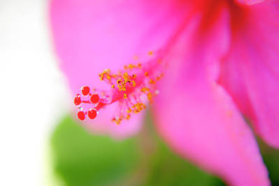 Hawaiian Flora Photograph - Pastel Droplets by Sean Davey