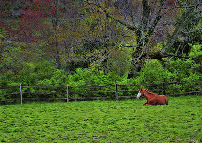 Photograph - Pasture Napping by JAMART Photography