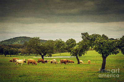 Photograph - Pasturing Cows by Carlos Caetano