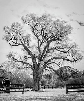 Photograph - Patagonia Tree by Teresa Wilson