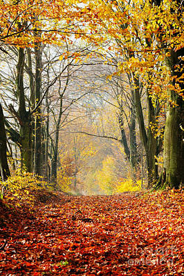 Foliage Photograph - Path Of Red Leaves Towards Light In Fall Forest by Michal Bednarek