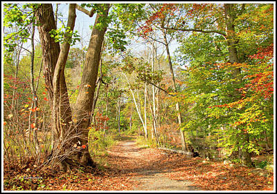 Photograph - Path Through A Pennsylvania Forest, Autumn by A Gurmankin