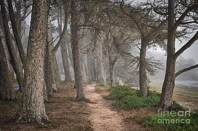 Photograph - Pathway by Alice Cahill