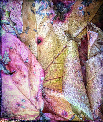 Photograph - Patterns From Leaves by Todd Breitling