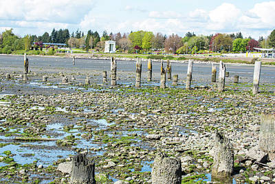 Photograph - Peace Arch And Old Pilings by Tom Cochran