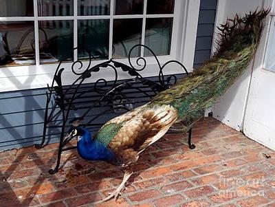 Photograph - Peacock Beauty by Ed Weidman