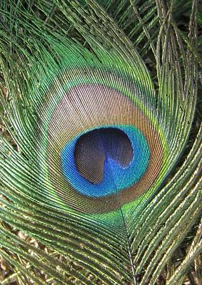 Peacock Photograph - Peacock Feather by Rebecca Shupp
