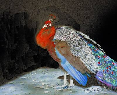 Peacock II Art Print by Chuck Kugler