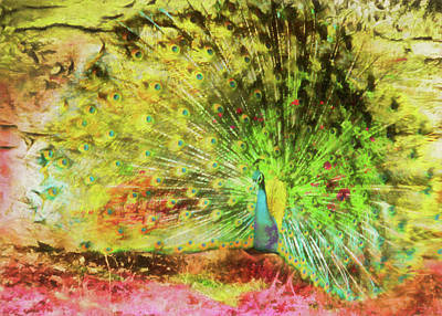 Photograph - Peacock Strut by JAMART Photography