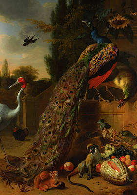 Painting - Peacocks by Melchior D'hondecoeter