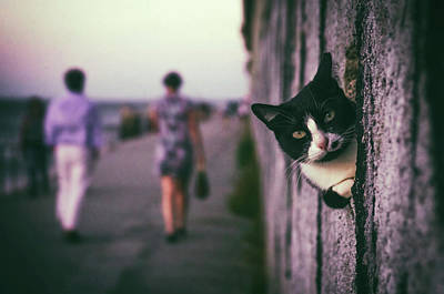 Domestic Pets Photograph - Peeking Cat by Carlos Caetano