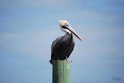 Photograph - Pelican 1 by Gordon Mooneyhan