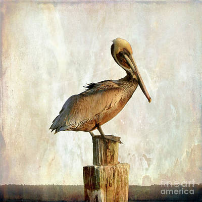 Photograph - Pelican Art by Scott Cameron