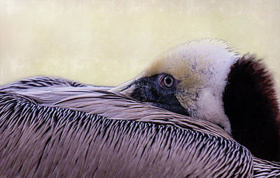 Photograph - Pelican Connection 2 by Louise Lindsay