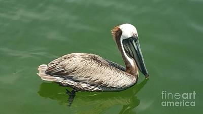Photograph - Pelican by Janice Spivey