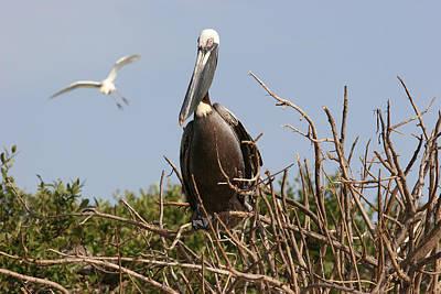 Sanibel Photograph - Pelican by Lynn Berreitter