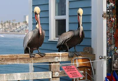 Photograph - Pelican Pals  by Christy Pooschke