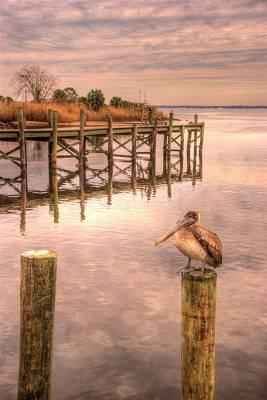 Pelican Perch Art Print