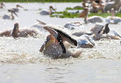 Pelicans, Djoudi National Park Art Print by Massimo Lama
