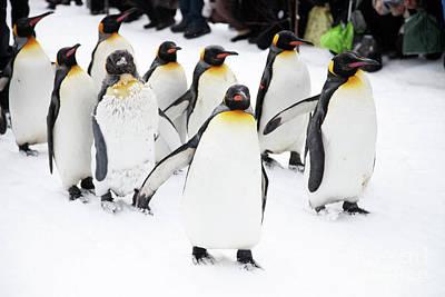 Photograph - Penguins by Kati Molin