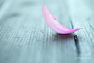 Photograph - Peony Petals by Kati Molin