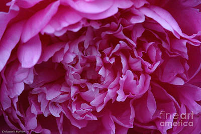 Photograph - Ruffled Peony  by Susan Herber