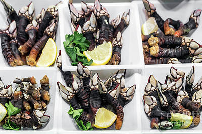 Photograph - percebes goose barnacles rare unusual seafood on display in Port by Jacek Malipan