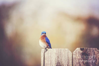 Photograph - Perched And Pretty by Scott Pellegrin
