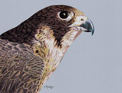 Drawing - Peregrine Falcon by Kathie Miller