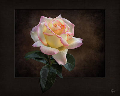 Photograph - Perfect Rose by Endre Balogh