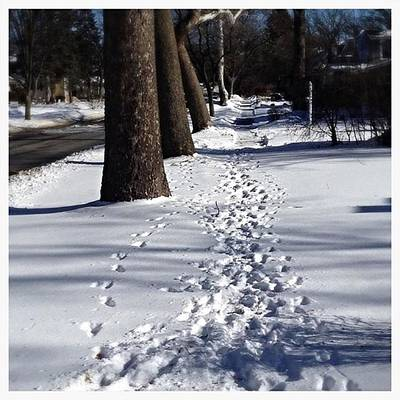 Photograph - Pet Prints In The Snow - Color by Frank J Casella