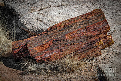 Photograph - Petrified Log by Jon Burch Photography