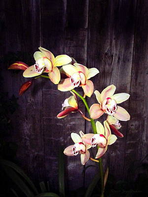 Photograph - Phalaenopsis Orchids by Joyce Dickens