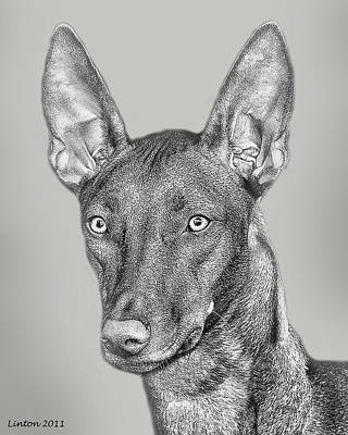 Pure Breed Digital Art - Pharaoh Hound by Larry Linton
