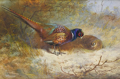 Painting - Pheasants  by Archibald Thorburn