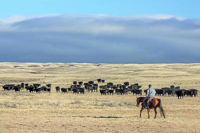 Driving The Herd Art Print