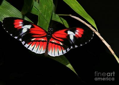 Photograph - Piano Key Butterfly by Sabrina L Ryan
