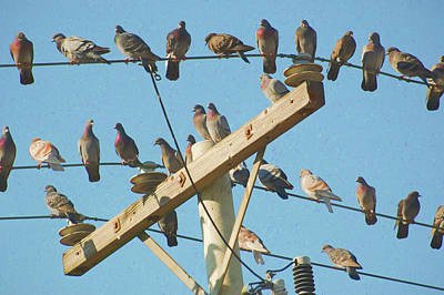 Photograph - Pigeons On A Telephone Pole by Rob Huntley