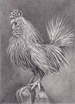 Pine Cones Drawing - Pine Chicken by Cheri Crawford